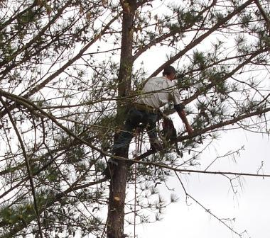 lawn care tree care knowledge and ability sell jobs