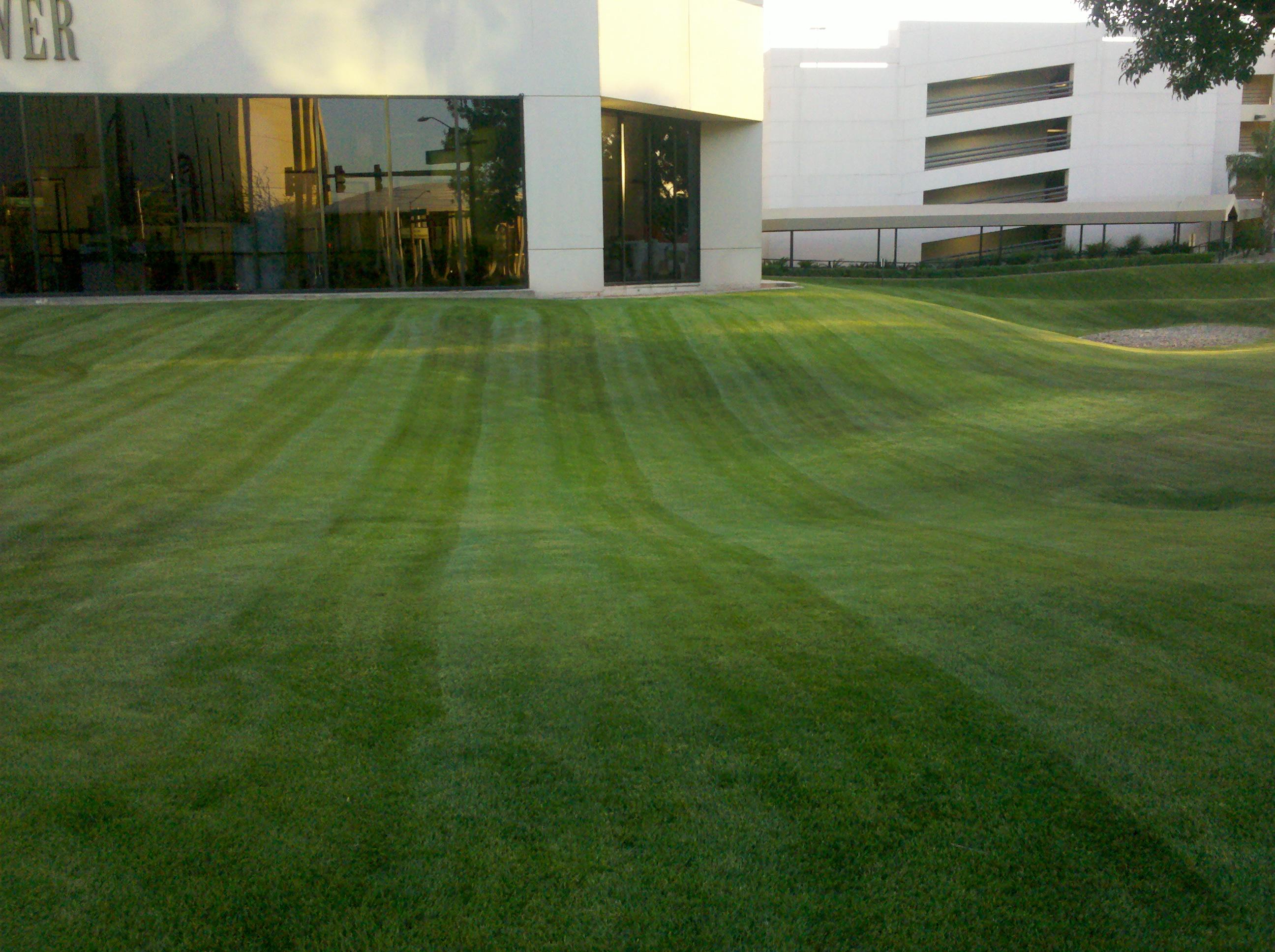 landscaping bids