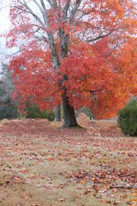 Leaf raking make money